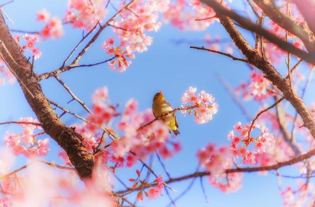 白い目の鳥が桜の木に