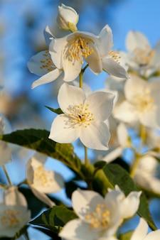 白い花、クローズアップ