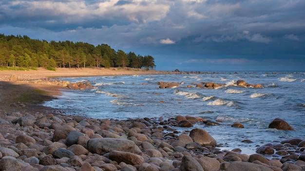 Дикий берег балтийского моря в финском заливе летним вечером на закате