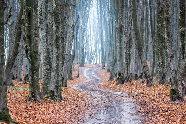 秋の森の曲がりくねった道。