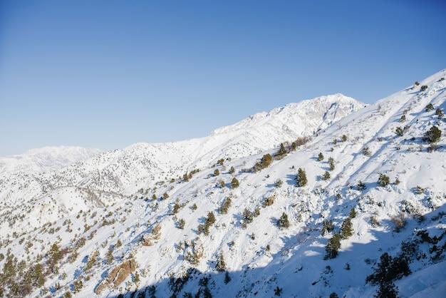 冬の森は雪で覆われています。雪の吹きだまりの妖精の木。ウズベキスタン