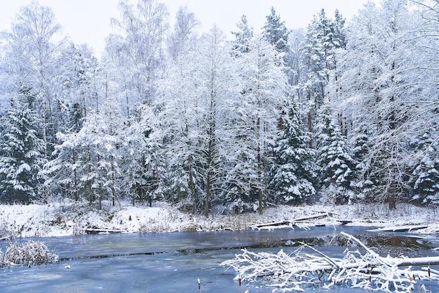 겨울 호수가 숲에서 얼다
