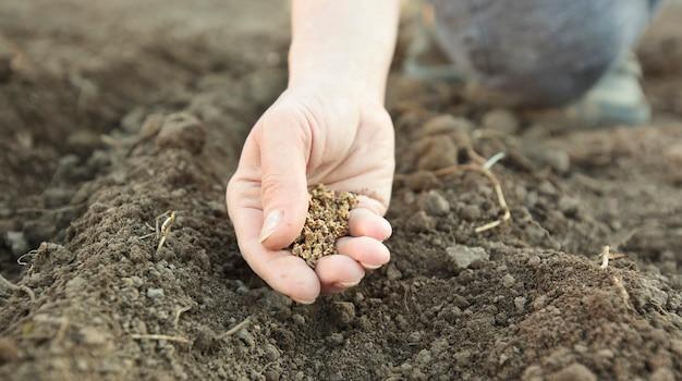여자가 땅에 씨앗을 심고있다
