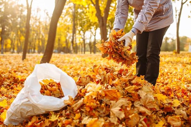 女性は落ち葉を鞄に入れます。週末の庭仕事と片付け。