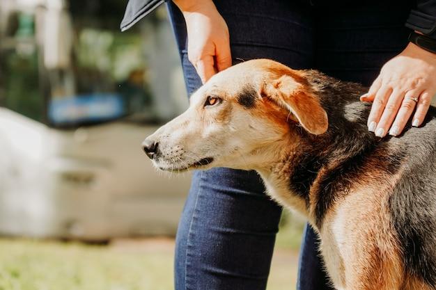 女性は庭の犬を撫でます。野良犬の愛と世話