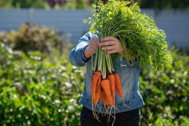 女性の手はニンジンの束を保持します採れたての野菜の配達の概念
