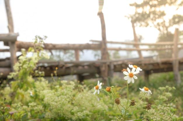 아침 빛과 안개와 함께 농장을 건너는 목조 다리