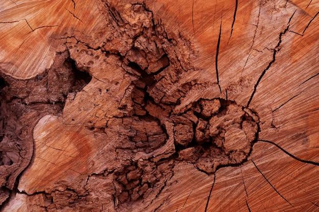 Древесная текстура старого пня с трещинами и трещинами.
