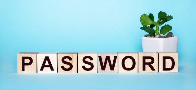 Слово пароль написано на деревянных кубиках возле цветка в горшке на голубой поверхности.