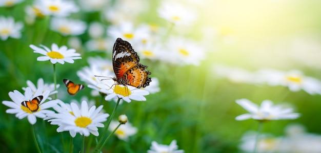 노란 주황색 나비는 녹색 잔디 필드의 흰색 분홍색 꽃에 있습니다.