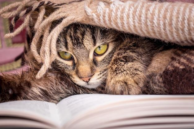 若い猫は本の横に毛布で覆われています。お気に入りの本を読む