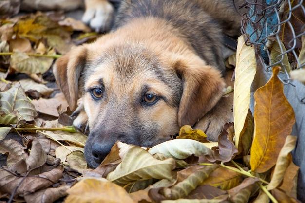 若い犬は色あせた葉の上に横たわっていて悲しいです