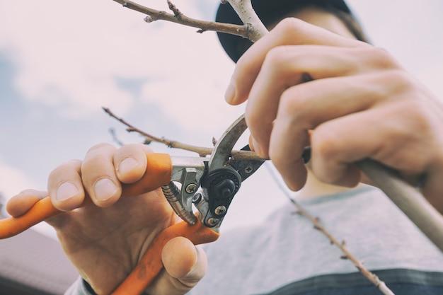 若い男は春先に剪定はさみで木の枝を切っています
