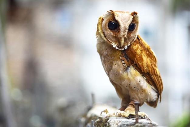 Молодая сова стояла и смотрела на окрестности.