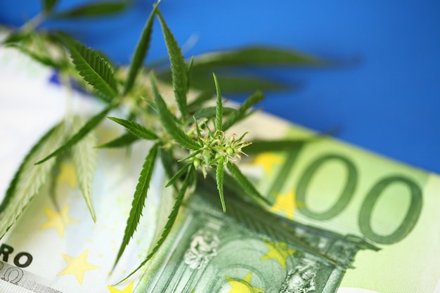 Therapeutic medicinal cannabis  - marijuana flower and hashish drug with euro bills money