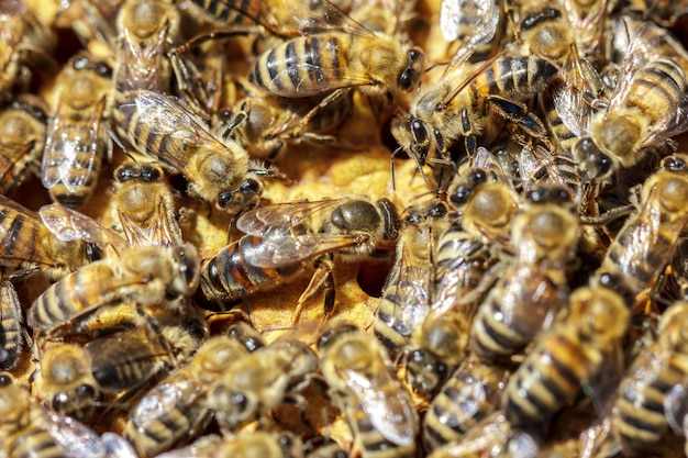 There are a lot of striped bees that sit on honeycombs