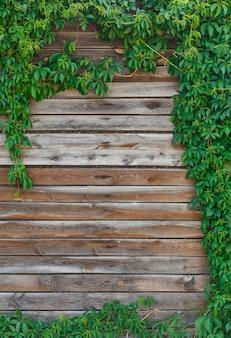 Есть красивый осенний или летний естественный фон: часть старой сельской деревянной стены обрамлена, состоящей из веток и листьев дикого винограда. копировать пространство