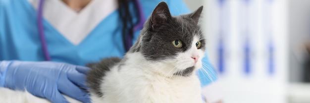 На столе ветеринара в офисе сидит кошка. услуги и услуги в концепции ветеринарных клиник