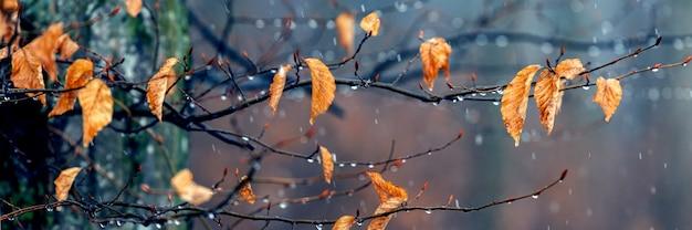숲에 젖은 눈이 있습니다. 강설량 동안 가을 숲에 시든 잎이 있는 나뭇가지
