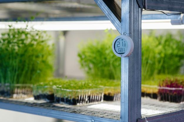 녹지 성장을위한 현대 온실에서 온도계 클로즈업. 건강한 식단.