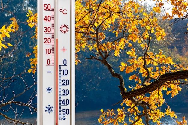 Термометр на фоне осеннего дерева с желтыми листьями показывает 25 градусов тепла. теплая осень Premium Фотографии
