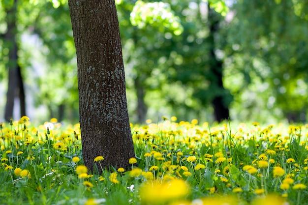 太い大きな木の幹と咲く黄色い花