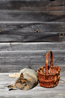 A thick cat is located next to an empty wicker basket lies on a wooden surface