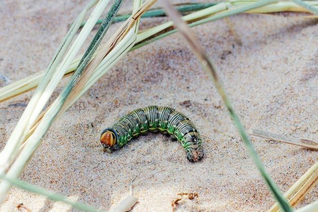 Толстая цветная гусеница на песке на берегу озера.