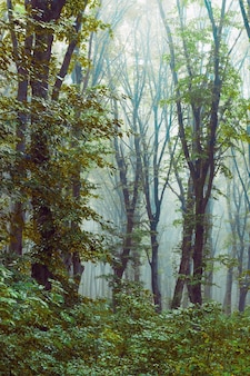 The thick fog in the forest