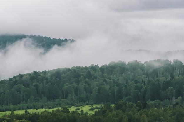 霧のコピースペースと山の濃い霧。流行に敏感なスタイルで色あせた緑のトーンで雄大な自然のヴィンテージの霧の風景。丘の間の不透明なもや。