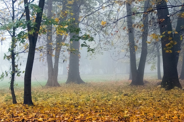 秋の公園の濃い霧。森の地面に黄色い落ち葉