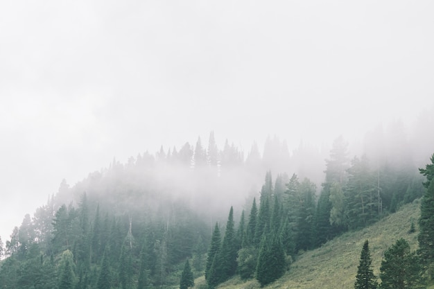Thick fog in mountains with copy space on mist. vintage foggy landscape of majestic nature in faded green tones in hipster style.