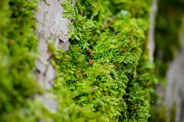 Thick green moss settled on a tree trunk