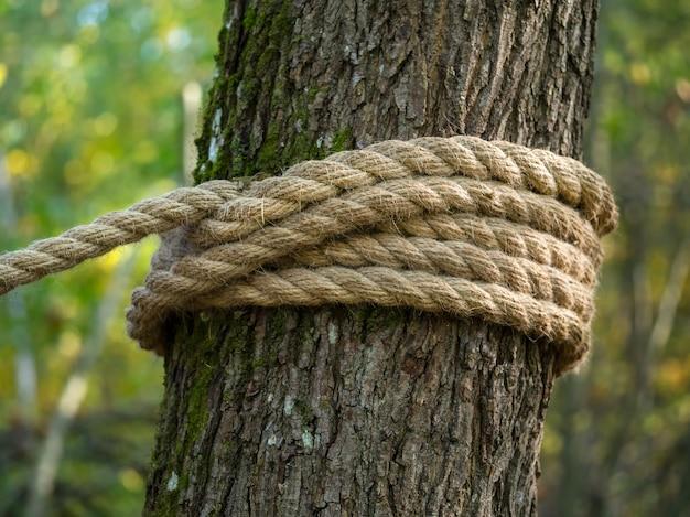 Толстая веревка из конопли наматывается на дерево