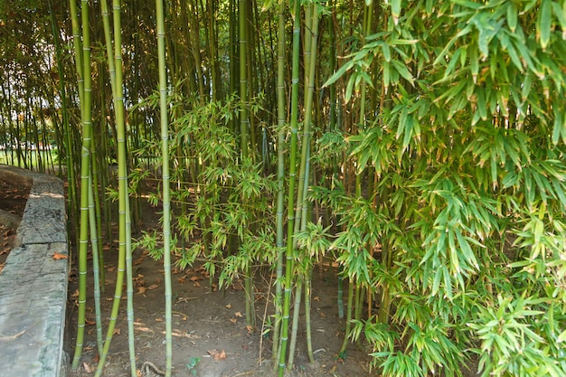 Thick thickets of young bamboo.