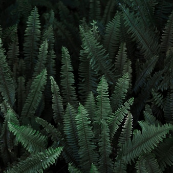 Thicket of wild fern