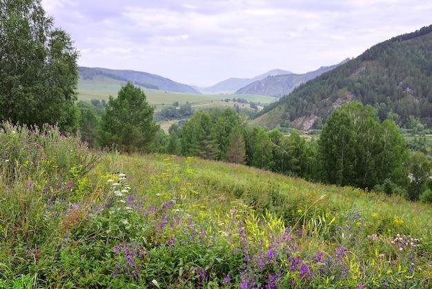 Заросли ярких полевых цветов на фоне гор под голубым облачным небом сибирь