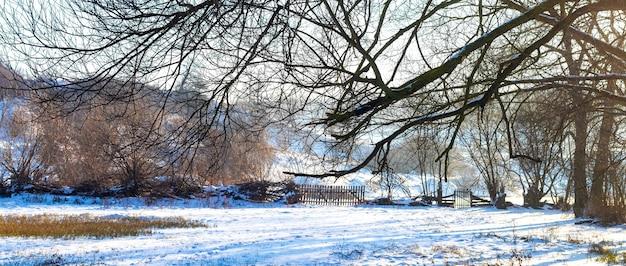 Заросли на окраине луга зимой в солнечный день