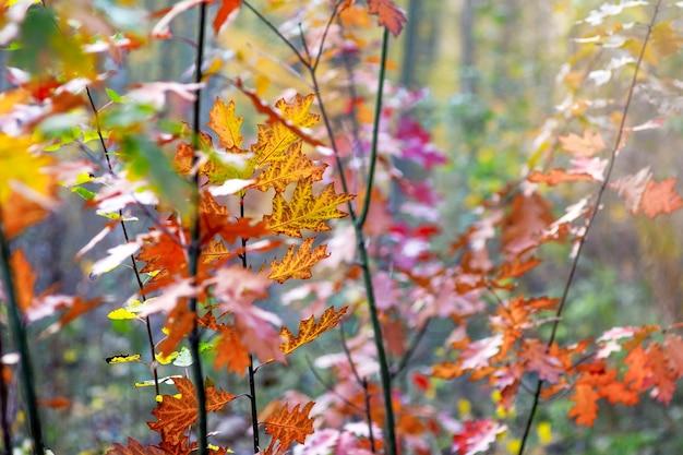 色とりどりの紅葉と赤いカシの若い木を茂み