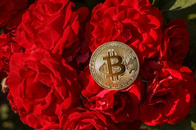 A thin golden coin of bitcoin is laying down on the rose flowers. the big and golden bitcoin was located on the red rose flower. on the red rose in blossom was put down a golden coin of bitcoin.