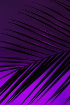 Thin leaf of a robelini palm tree in neon pink, purple and blue colors. vertical modern background