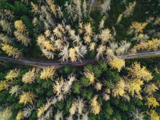 Thin narrow road in a forest shot from an aerial view