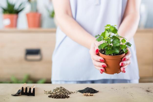 Подумайте о зеленой концепции. хобби комнатное садоводство. женщина держит комнатное растение для пересадки.