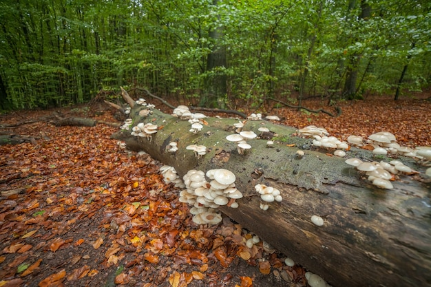 This is a mushroom formation growing on fallen tree in magical green forest