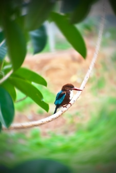 This is a picture of a common kingfisher bird that can be found around