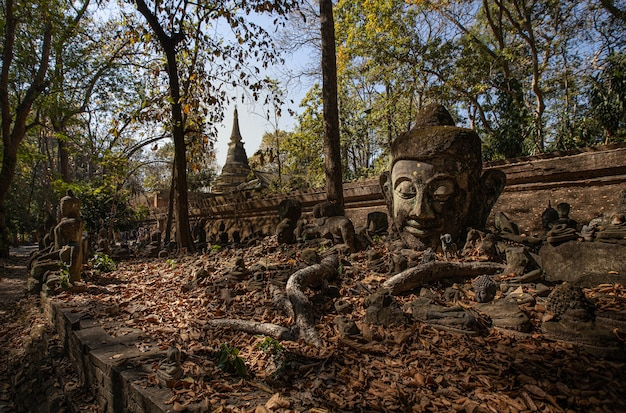 This is the picture of wat umong, buddhist temple in chiang mai, thailand