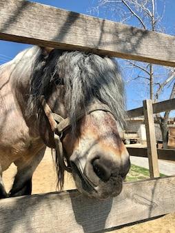Эта милая лошадь просто обожает, когда ее посещают дети, семьи и пары.