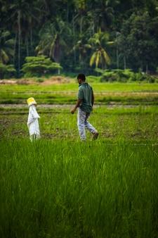 На этой фотографии рассказывается история фермера, проверяющего свое рисовое поле.