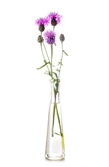 Thistle in test tube
