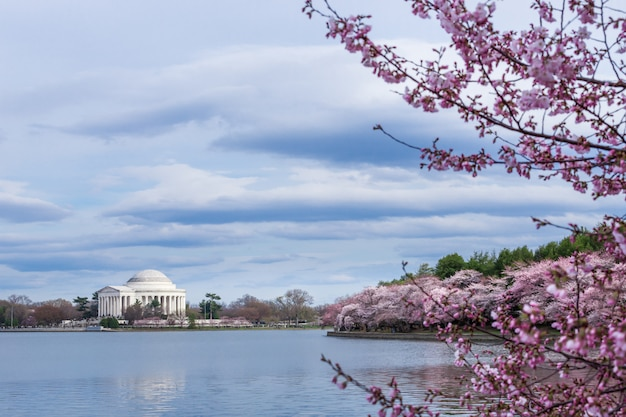 Thomas jefferson memorial during cherry blossom festival at the tidal basin, washington dc, usa